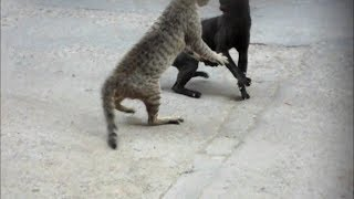 getlinkyoutube.com-Crazy Cat Fight!!!