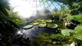 getlinkyoutube.com-A visit to the Tropical Greenhouse at Uppsala University