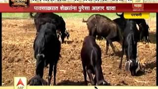 getlinkyoutube.com-Agro 7 12 Parbhani goat farming story