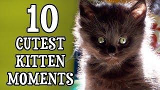 10 süße Katzenmomente