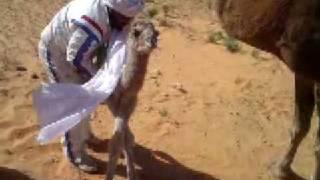 getlinkyoutube.com-رحلة المزاريع  ليبيا4