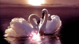 FUTAGE Dve Lebedi - Футаж Две лебеды