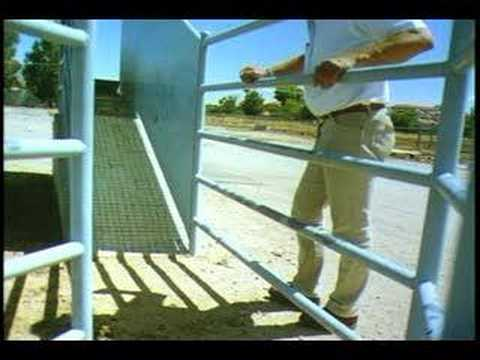 VIDEO: Cattle Behavior and Handling ~ ganadería méxico