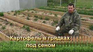getlinkyoutube.com-Картофель в грядках под сеном