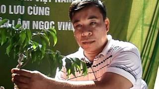 getlinkyoutube.com-Video nghệ nhân Lâm Ngọc Vinh trình bày kỹ thuât tạo hình Bonsai phần 2