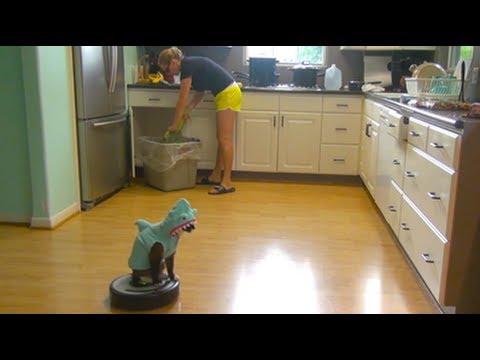 Nada pode parar um gato vestido de tubarão - SharkCat cleaning Kitchen