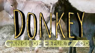 "getlinkyoutube.com-Esel ""Gangs of Erfurter Zoo"""