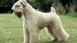 getlinkyoutube.com-Basic Dog Grooming 101 by  Bobs Pet Stop  http://www.BobsPetStop.com