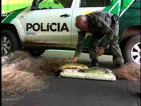 POLICIA AMBIENTAL APREENDE TARRAFAS