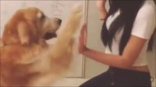 getlinkyoutube.com-A girl and her dog 2  ( Wonderful  thumbnail and free intro templates )