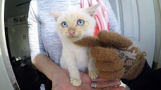 getlinkyoutube.com-GoPro Awards: Frozen Kitten Lives
