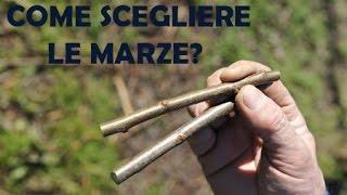 getlinkyoutube.com-SCEGLIERE MARZE INNESTO OLIVO - Innestipiante.it