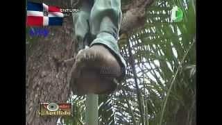 getlinkyoutube.com-Desconocidos ahorcan haitiano en una plaza pública de Santiago video en vivo
