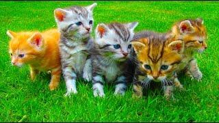 getlinkyoutube.com-Милые котята, маленькие кошки