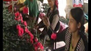 मसूरी: नोट बंदी से पड़ा फूलों के कारोबार पर असर