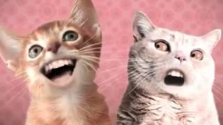 getlinkyoutube.com-прикол с поющими котами