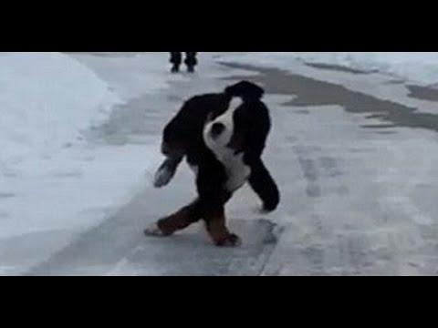 Animais engraçados escorregar e cair On Ice - animal não Compilation 20150 [HD VIDEO]