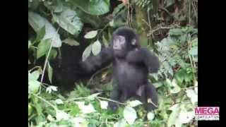 Clip hai - Những clip hài hay nhất tuần 1 tháng 7/2012