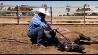 getlinkyoutube.com-How to Lay Down a Horse