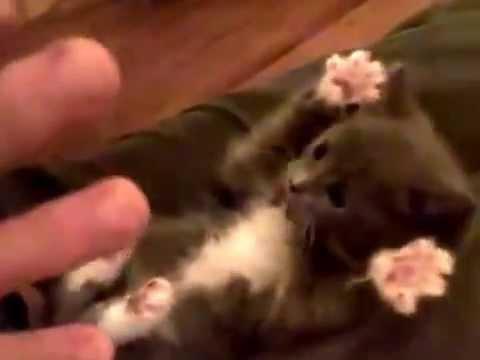 Gatinho Surpreso com Cócegas