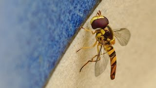 getlinkyoutube.com-Hover Fly  -Panasonic Lumix FZ1000 4k Video with Sigma Achromatic V3