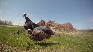 Bowhunting Turkeys