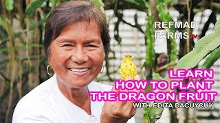 UNA DEKADA  Planting the Dragon Fruit Cactus HD
