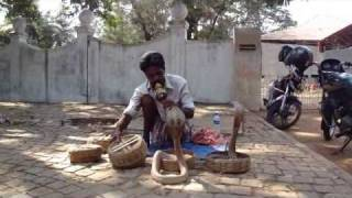 snake charmer with 4 cobras in Kochi (India)