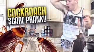 getlinkyoutube.com-COCKROACH SCARE PRANK!!