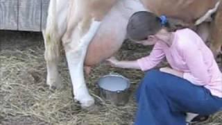 getlinkyoutube.com-Milking Cow at Vaughn Farm