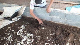 getlinkyoutube.com-มาดูวิธีเลี้ยงไส้เดือนเพื่อผลิตปุ๋ยอินทรีย์คุณภาพสูง