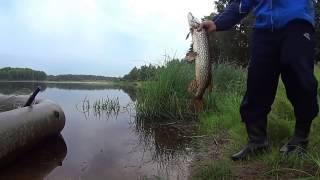 getlinkyoutube.com-Fishing