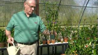 getlinkyoutube.com-Watering Orchids