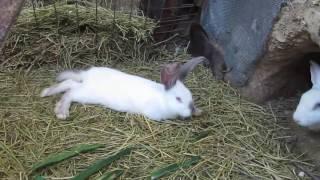 getlinkyoutube.com-Кролики в яме 29 мая 2016 краткое содержание