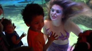 getlinkyoutube.com-Silverton Casino/Lodge Playful Mermaid