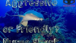 Belize Nurse Shark & Me - Aggressive or Friendly?