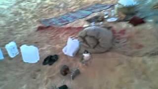 getlinkyoutube.com-أبو عمر الرشيدي والذيب 1433هـ