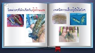 getlinkyoutube.com-กุ้งก้ามแดง EP 2 โรคต่างๆที่มักเกิดกับกุ้ง และเทคนิคการเลี้ยงในแต่ละไซด์