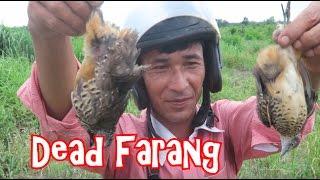 getlinkyoutube.com-EAT OR DIE: Catching and Eating Birds in Cambodia