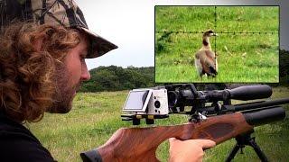getlinkyoutube.com-Egyptian Goose Pest Control with an Airgun