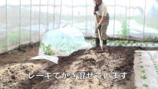菜園作業/雨の日は雨よけハウス