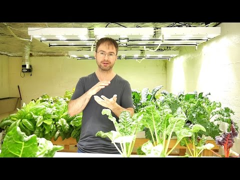 About Me & Why I'm Doing This - Basement Hydroponic LED Grow Light Garden