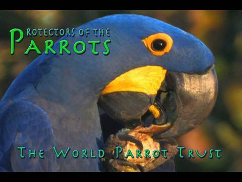Protectors of the Parrots - World Parrot Trust