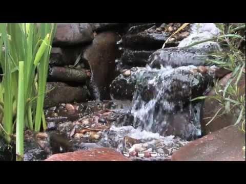 Water Garden Pond Design