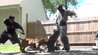 "getlinkyoutube.com-Controlled Pitbull Aggression ""Worlds Most Elite Protection K9's"" DDK9"