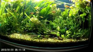 getlinkyoutube.com-самодельные удобрения в аквариум. график внесения