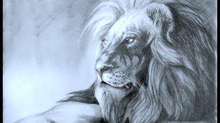 getlinkyoutube.com-Hoe Teken je een leeuw / dieren tekenen / #16