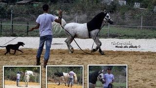 getlinkyoutube.com-الخيول العربية...مهنة، حلم وطموح