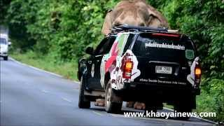 getlinkyoutube.com-park rangers controlling an elephant on the road