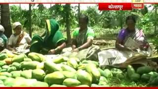 getlinkyoutube.com-712: Kolhapur: Papai Cultivation: Success Story Of Namdev Shinde: 29:06:2016